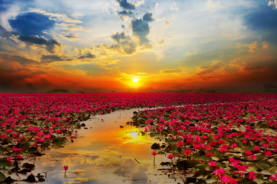 Фотообои Озеро лотосов
