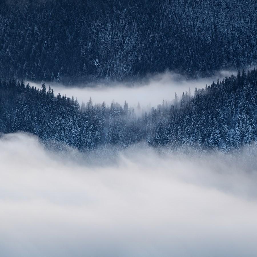 Фотообои Зимний туманный лес