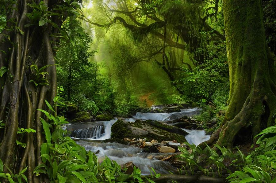 Фотообои Тропические джунгли