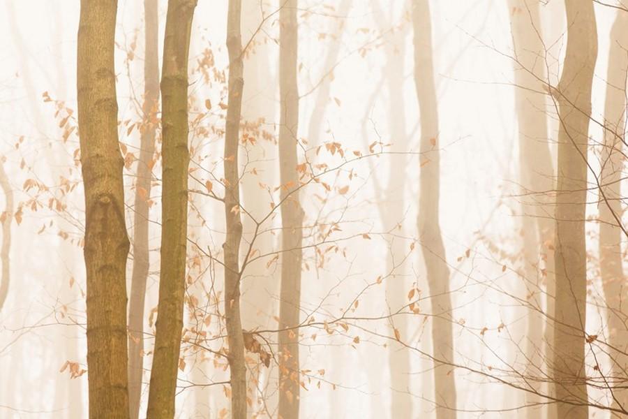 Фотообои Веточки деревьев