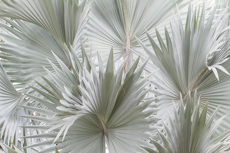Фотообои Голубая пальма