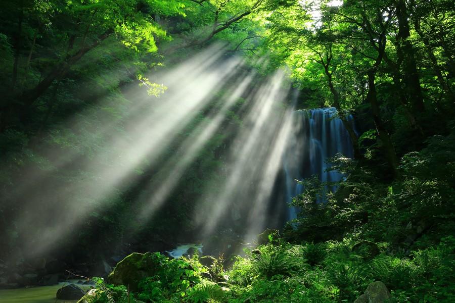 Фотообои Водопад в солнечном лесу