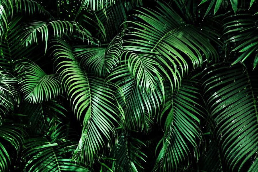 Фотообои Листья в джунглях