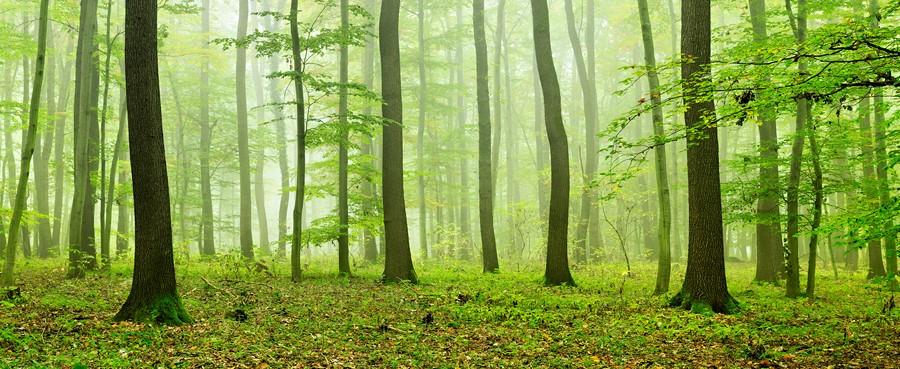 Фотообои Зелёный лиственный лес