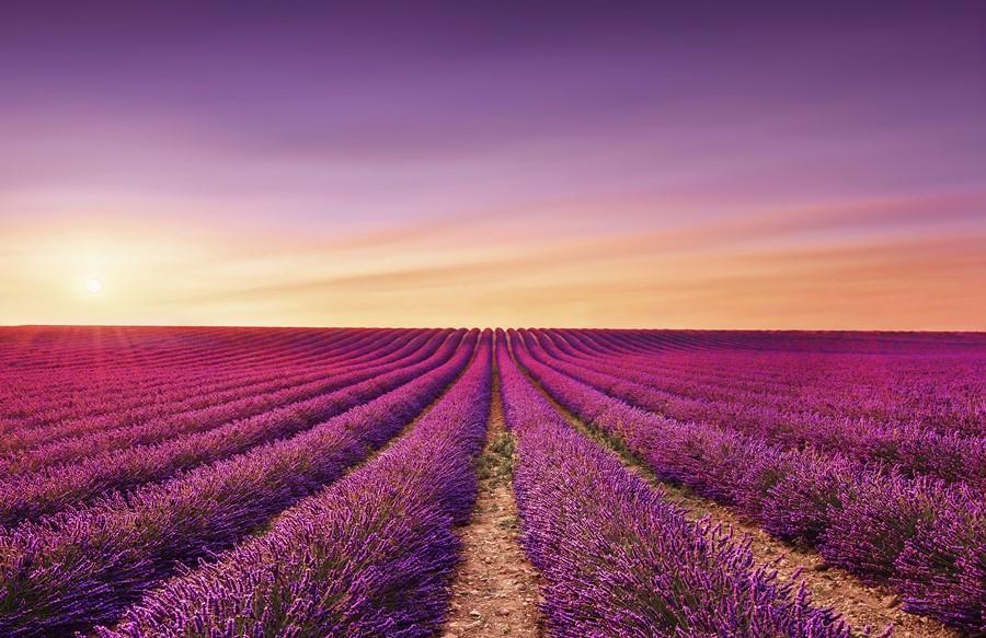 Фотообои Сиреневое поле