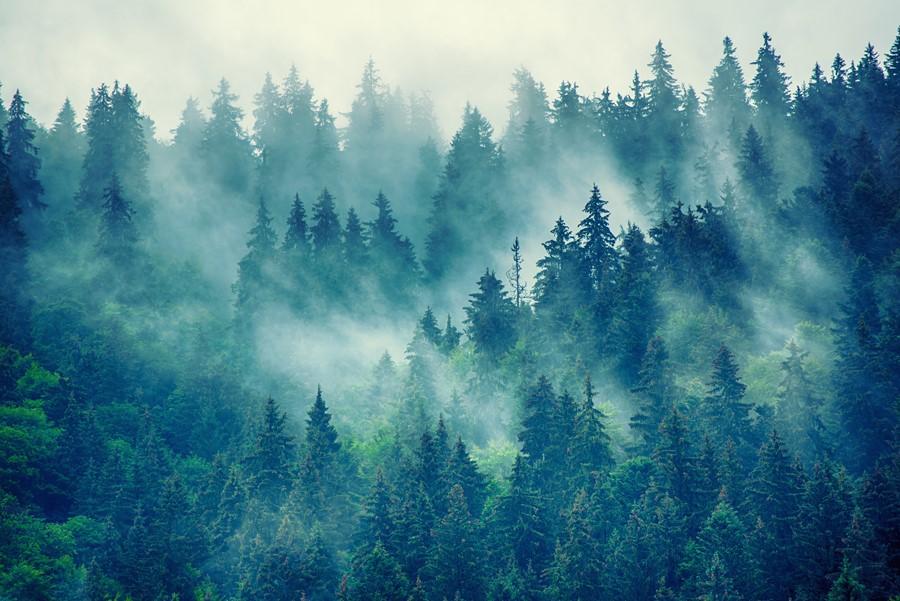 Фотообои Ноябрьский лес