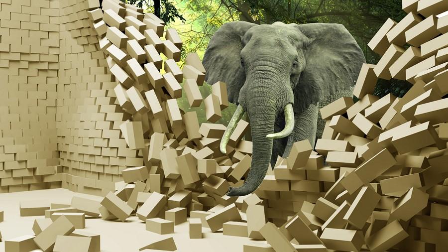 Фотообои Серый слон