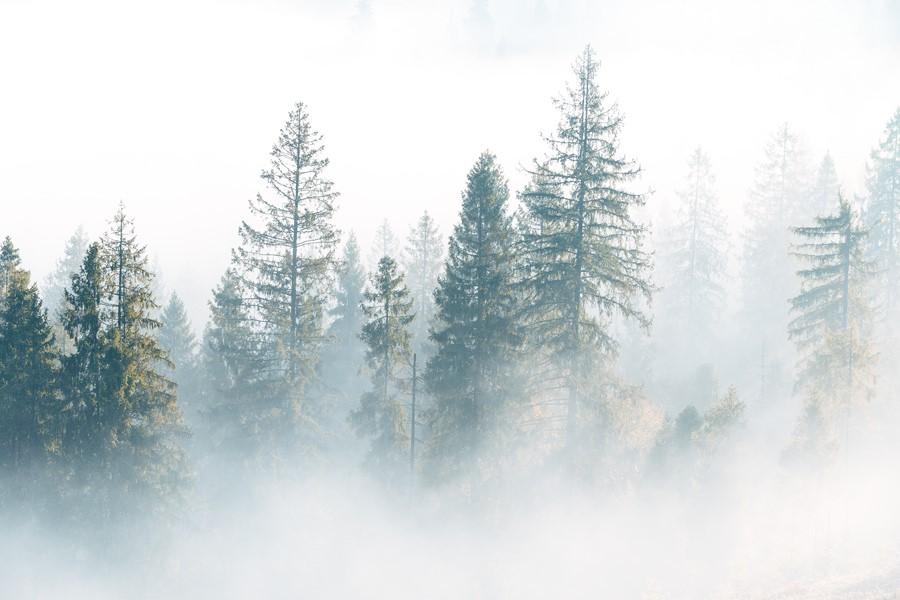 Фотообои Утренний лес