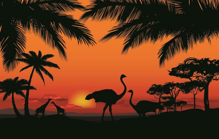 Фотообои Африканские страусы
