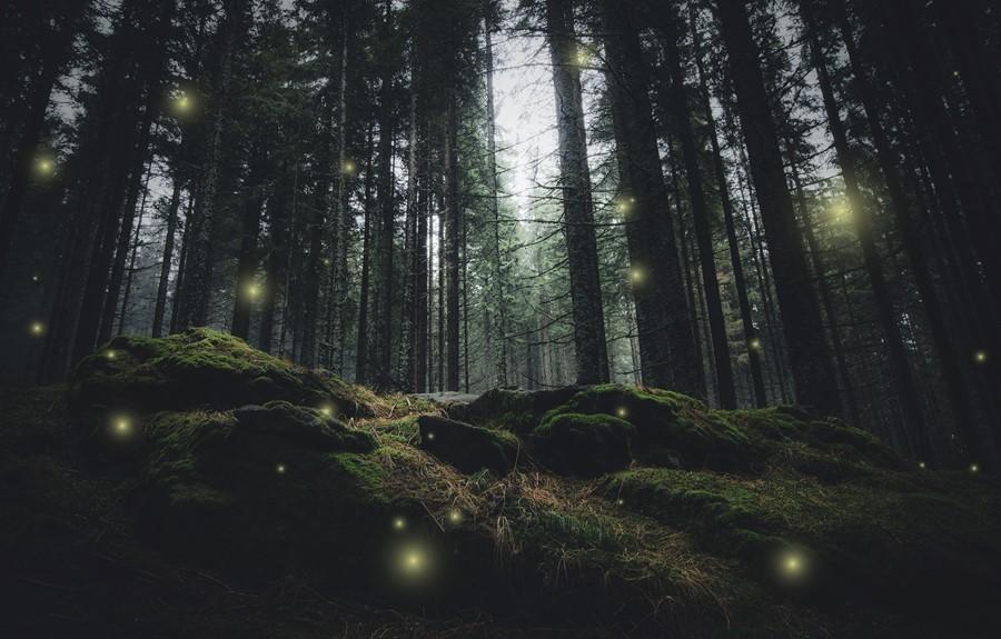 Фотообои Светлячки
