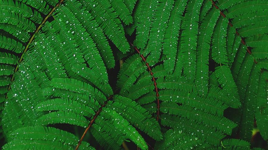 Фотообои Папоротник после дождя