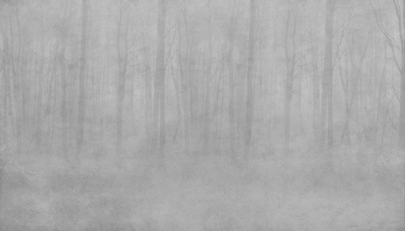 Фотообои Роща в серой дымке